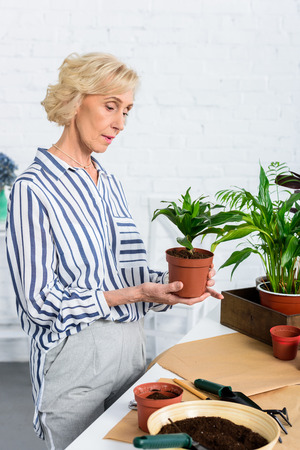 focused senior woman holding green potted plant at home Stock Photo