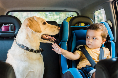 adorable toddler boy in safety seat touching labrador dog on backseat Stock Photo