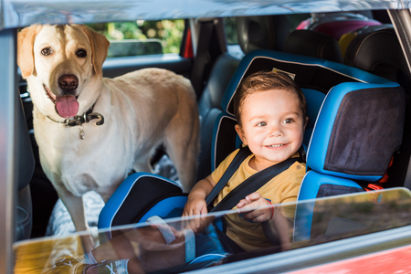 smiling adorable toddler boy in safety seat with labrador dog on backseat Stock Photo