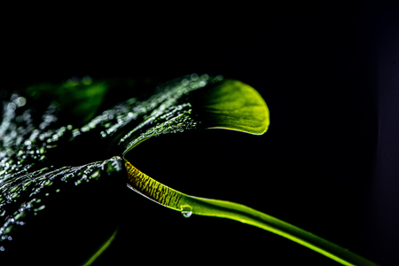 green tropical leaf with drops, isolated on black