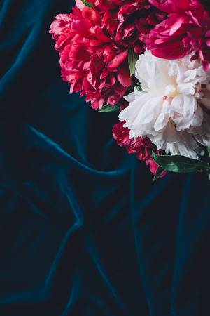 top view of one pink peony flowers on dark cloth Zdjęcie Seryjne
