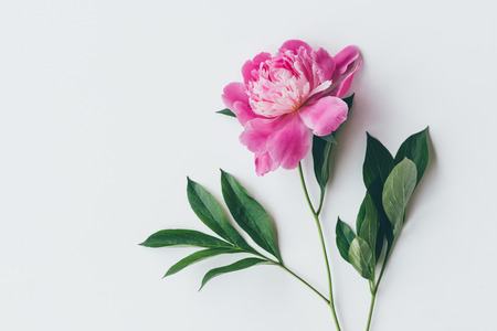 top view of one pink peony with leaves isolated on white