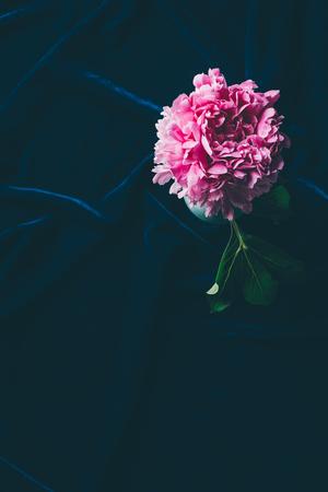 top view of pink peony flowers with leaf on dark cloth Zdjęcie Seryjne