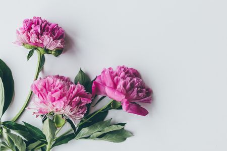 top view of pink peony bloom with leaves on white