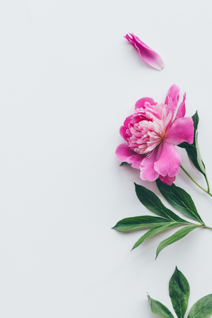 top view of beautiful pink peony flower with leaves isolated on white Zdjęcie Seryjne
