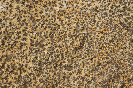 full frame image of spotted wall backgorund Reklamní fotografie - 105991647