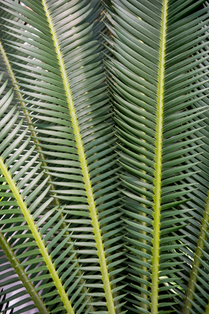 full frame image of palm green leaves background Фото со стока