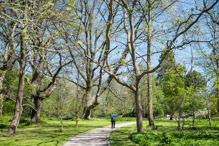 back view of woman walking on path between trees in botanical garden
