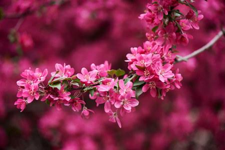 Vista de primer plano de hermosas flores de rosa brillante en rama Foto de archivo - 106019611
