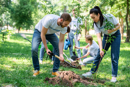 volunteers planting trees in green park together Reklamní fotografie
