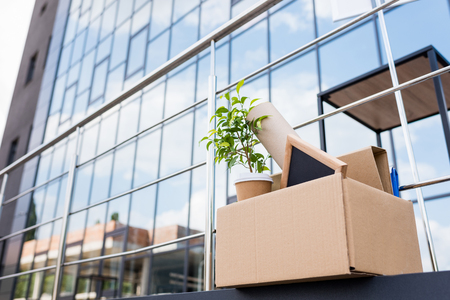 potted plant and disposable coffee cup in paper box on street near office building