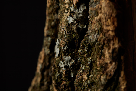 Close up shot of tree bark isolated on black background 写真素材