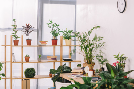 wooden shelves with potted plants in office