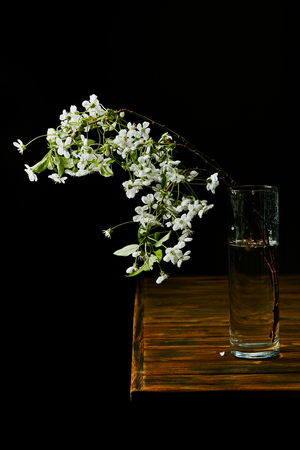 close-up shot of branch of beautiful cherry blossom in vase on wooden table isolated on black