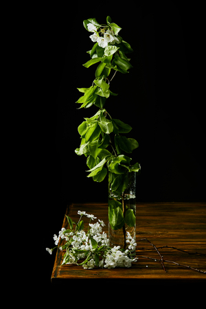 close-up shot of branch of aromatic cherry blossom in vase on wooden table isolated on black