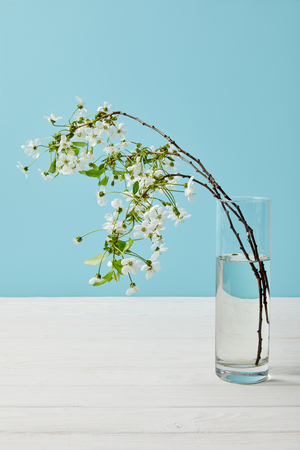 close-up shot of branches of beautiful cherry flowers in glass isolated on blue Banco de Imagens