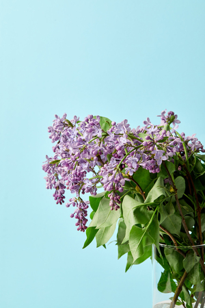 aromatic beautiful lilac flowers in vase isolated on blue Banco de Imagens
