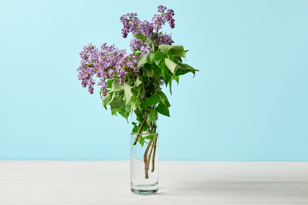 close-up shot of beautiful spring lilac flowers in vase isolated on blue