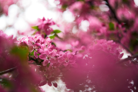 close-up shot of pink cherry blossom on tree outdoors