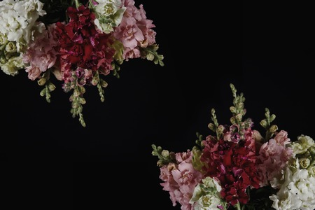 beautiful various decorative gladioli flowers with buds isolated on black background