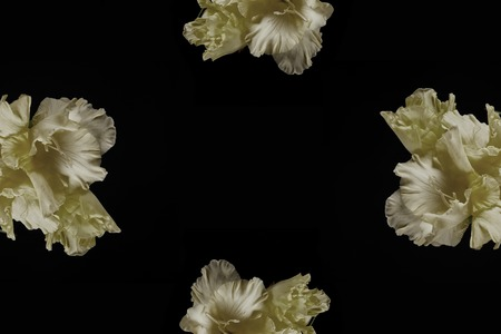 close-up view of tender yellow gladioli flowers isolated on black background Stock Photo