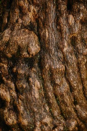 close up of brown old oak bark