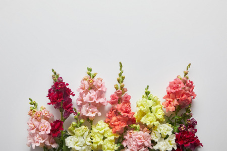 beautiful fresh blooming decorative gladioli flowers on grey background Stock Photo