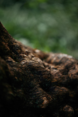 selective focus of tree bark on blurred background