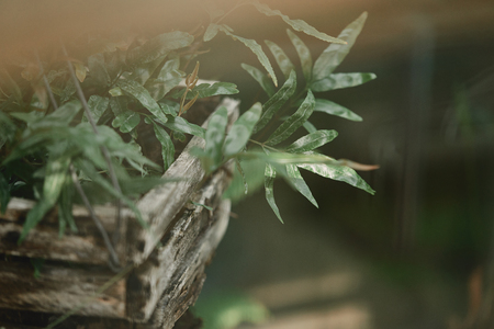 selective focus of green plant leaves in wooden box outdoors Stock Photo