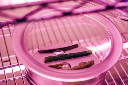 close up view of various stems in glass container in agro laboratory with ultra violet light