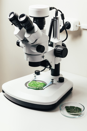 selective focus of green leaf under microscope in modern biotechnology laboratory