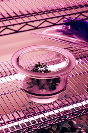 cropped image of scientist checking green branch in glass container in agro laboratory with ultra violet light