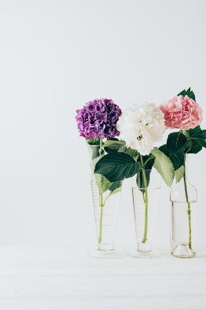 pink, purple and white flowers of hydrangea in glass vases, on white Banco de Imagens