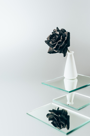 black rose in vase reflecting in mirrors isolated on white Фото со стока