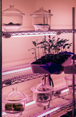 partial view of biologist putting potted sprouts under ultra violet light in modern laboratory
