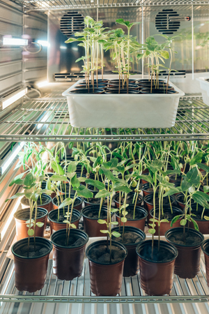 selective focus of potted sprouts in modern agro laboratory