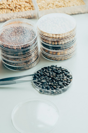 close up view of tweezers, various grains and sunflower seeds in modern agro laboratory