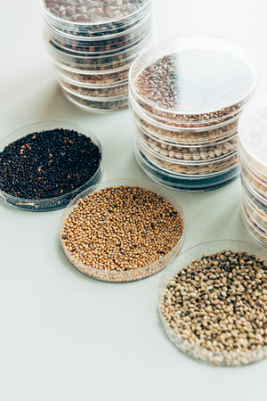 selective focus of various grains in plastic containers in modern agro laboratory Imagens