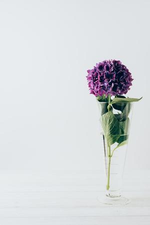 purple hydrangea flower in glass vase, on white 免版税图像 - 106420807