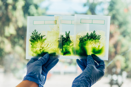 partial view of scientist in latex gloves examining grass in packages in agro laboratory Stock Photo