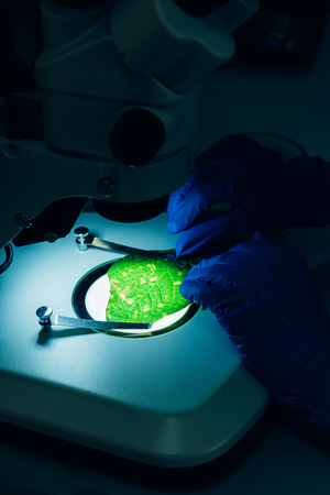 cropped image of scientist examining green leaf under microscope in laboratory
