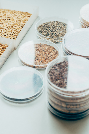 close up view of various seeds in plastic containers in modern biotechnology laboratory Stock Photo