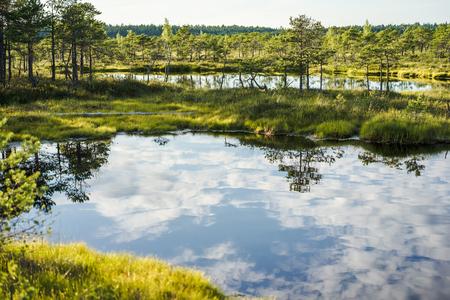 szenische Ansicht des Flusses mit Wolkenreflexion im Wasser und in den grünen Pflanzen herum in Riga, Lettland Standard-Bild