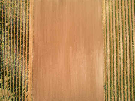 aerial view of rows of grape vines and brown soil, czech republic
