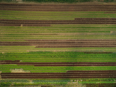 aerial view of beautiful agricultural fields with rows of greenery, europe