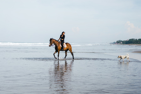 dog and young female equestrian riding horse on sandy beach Stock Photo