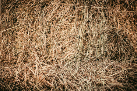 full frame image of pile of dry grass background