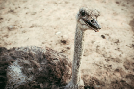 high angle view of ostrich standing on ground at zoo