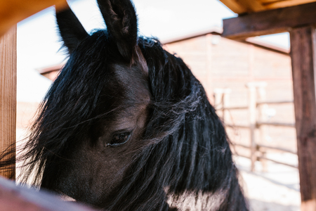 close up view of horse muzzle on blurred background at zoo Reklamní fotografie - 106599212