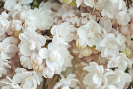 full frame image of white lilac background 写真素材 - 106601798